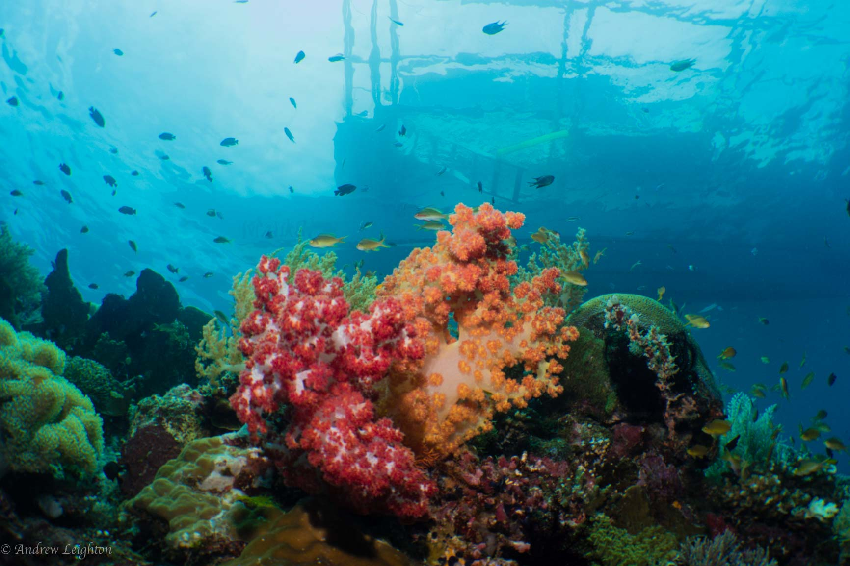 Soft Corals with Bangka