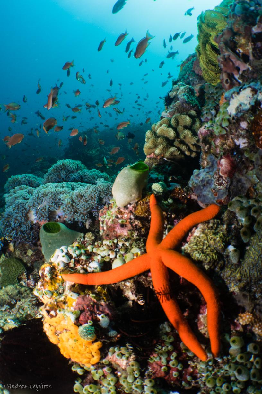 Reef Scene with Orange Starfish