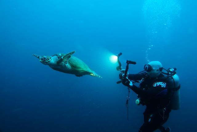 Hawksbill Sea Turtle and Diver