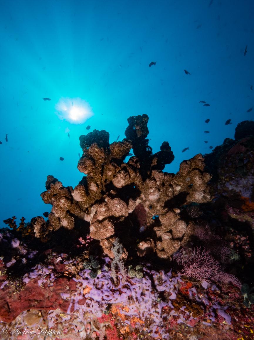 Coral sunburst