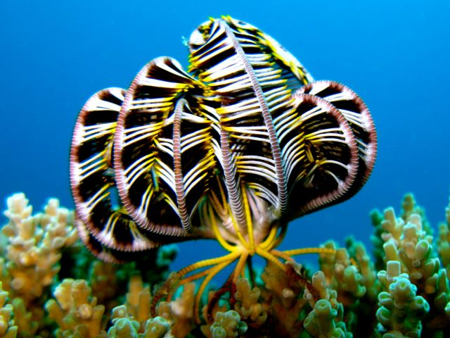 Picture tag feather star