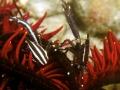 Elegant Squat Lobsters