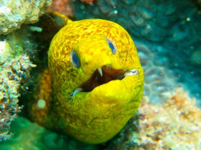 Very unusual colored Moray eel