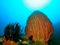Barrel Sponge and Feather Star