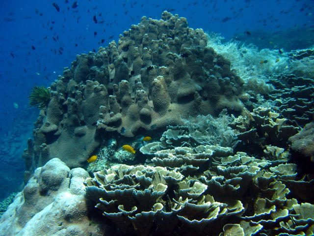Picture Tag Coral Garden