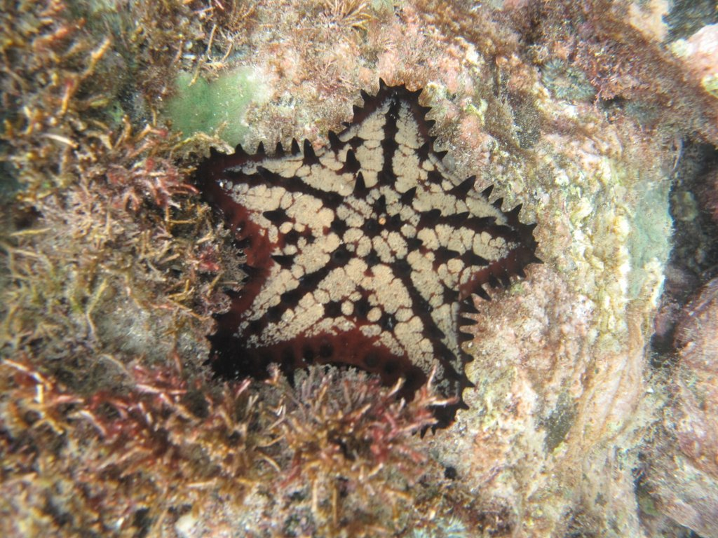 Picture tag starfish