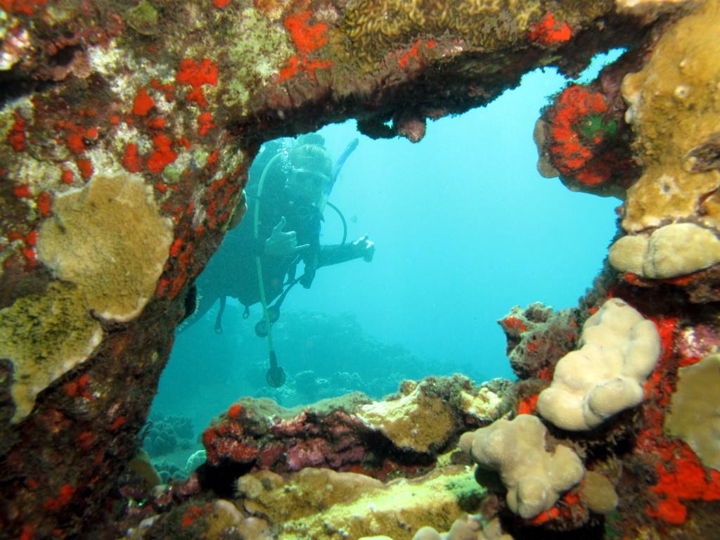 Dive buddy bff
