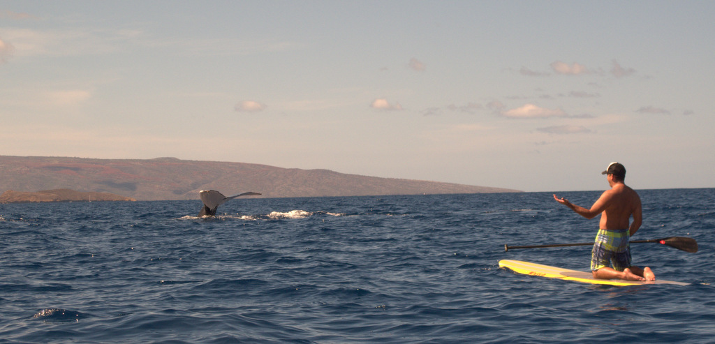 Humback Whales & SUP