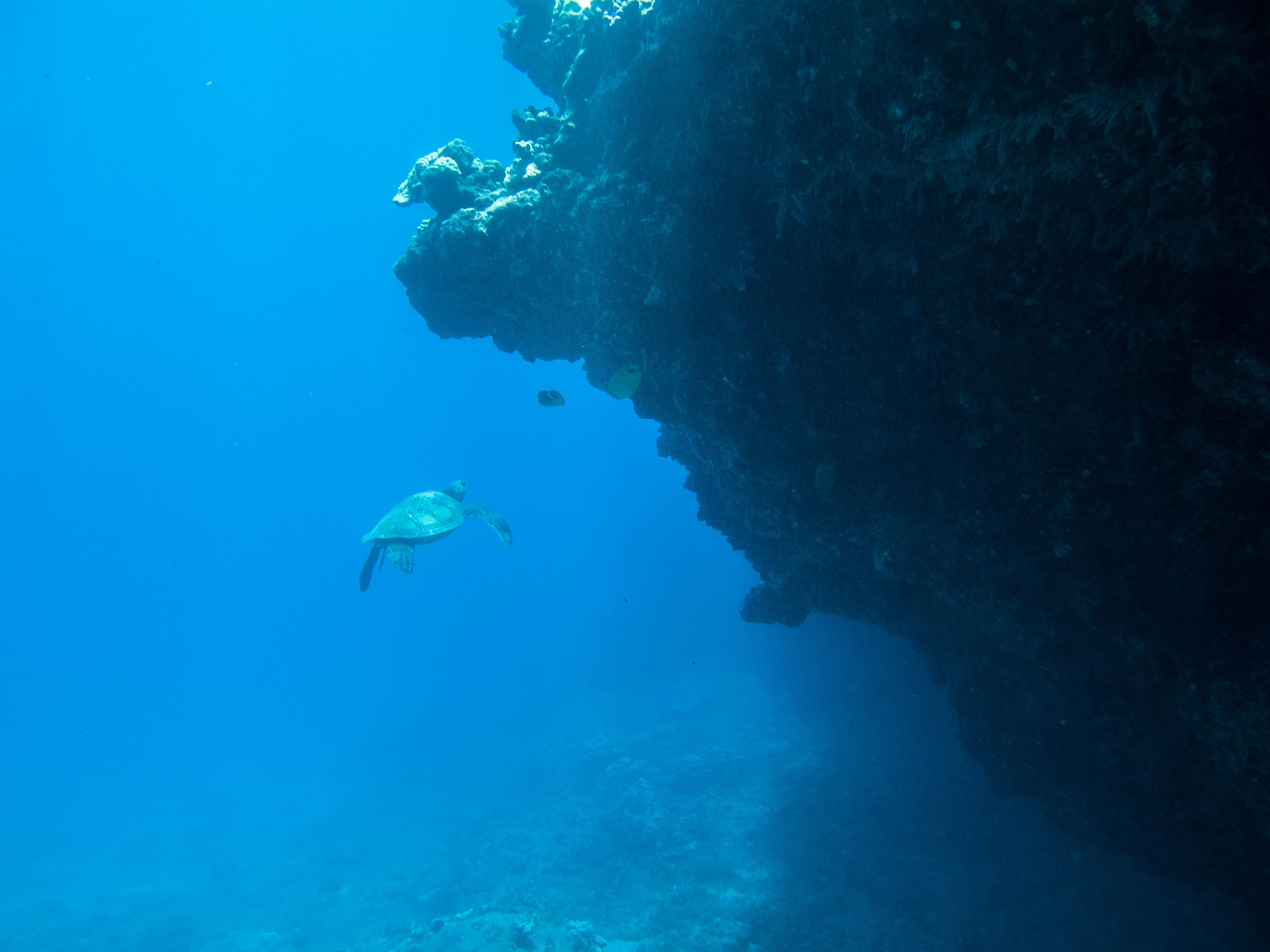 Turtle Makena Landing