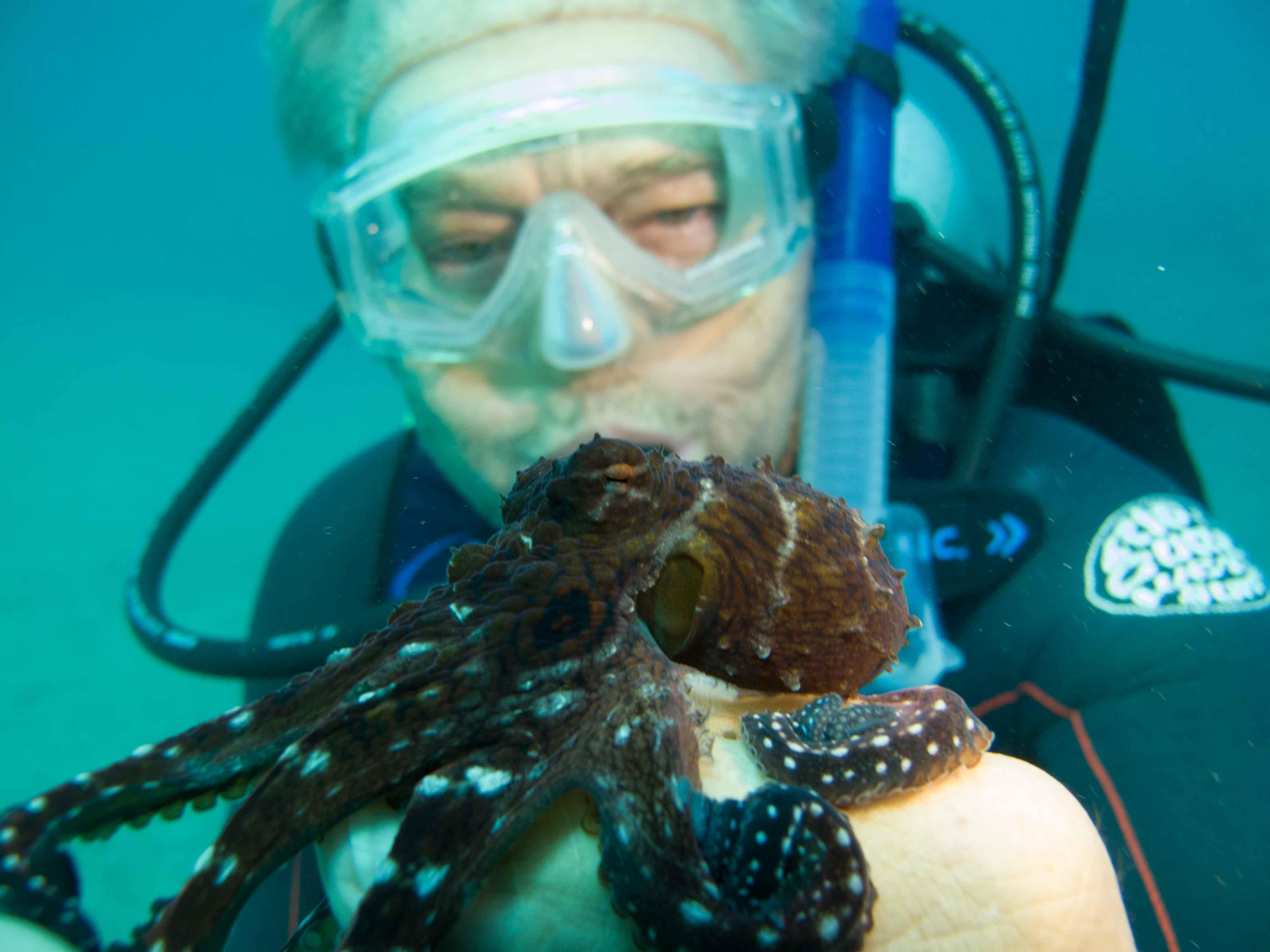 Diver & octopus