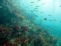 Senoritas over the reef