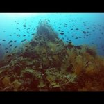 Diving Colombia's Pacific Coast