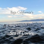 Baja's Sea of Cortez – Mexico