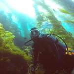 Anacapa Island Diving