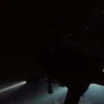 Santa Cruz Night Dive