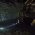Night snorkel Mauna Kea, Big Island Hawaii