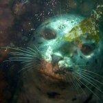 Seal dive buddies – Santa Cruz Island