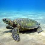 Maui shore diving June '15